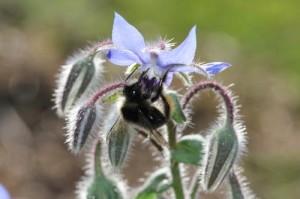 Pesticides : l'impact sur la disparition des pollinisateurs enfin admis  par l'Autorité européenne