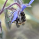 «Le Guetteur» : le guide Greenpeace des produits impliquant OGM et pesticides tueurs d'abeilles !