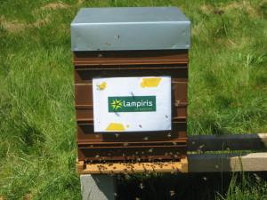 Les 75 colonies Lampiris sont en cours d'installation chez leurs nouveaux bergers
