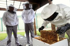 Le projet apiculture à la prison de Marche-en-Famenne