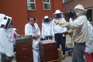 Quand les abeilles deviennent thérapeutes…